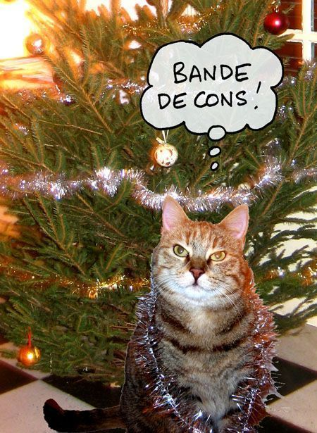 Chats page 3 - Sapin de noel humour ...